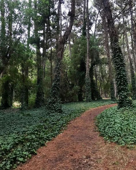 """🤍 on Instagram: """"fairy land🧚🏻♀️ #photo #photography #buenosaires #miramar #forest #bosque #instagram #foryou #magic #nature #landscape #paisajes #green…"""""""