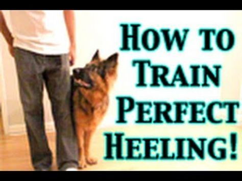 How To Train Any Dog To Heel Perfectly Dog Training Tips