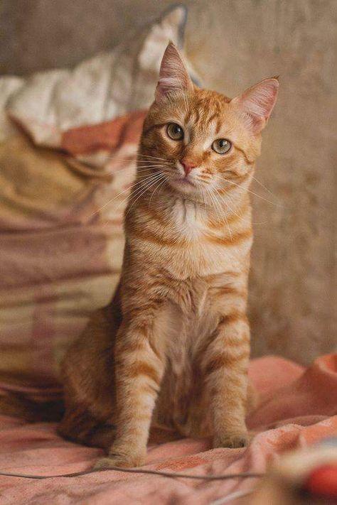 Ebru Sarpman Adli Kullanicinin Kedi Panosundaki Pin Tekir
