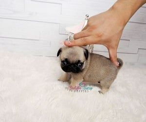 As I touch my little cute dogs they have beautiful fur cute | Puppy | Dog | anim...