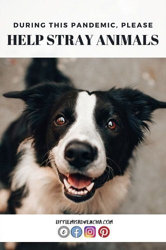 Please Consider Opening Your Home To Stray Animals In 2020 Dog Barking At Night Dog Signs Dog Barking