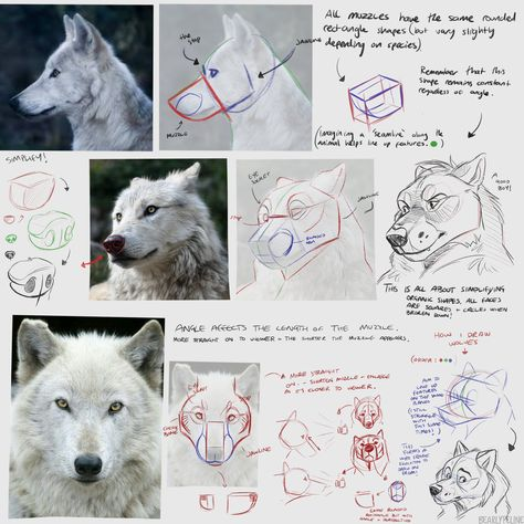 """""""Our feature artist/tutorial for today is this SIMPLY WONDERFUL page of notes by the excellent Beautiful explanations, wonderful illustrations and real-world examples, a perfect tutorial! Wolf Face Drawing, Furry Drawing, Anime Wolf Drawing, Anime Art, Animal Sketches, Animal Drawings, Art Sketches, Wolf Drawings, Eye Drawings"""