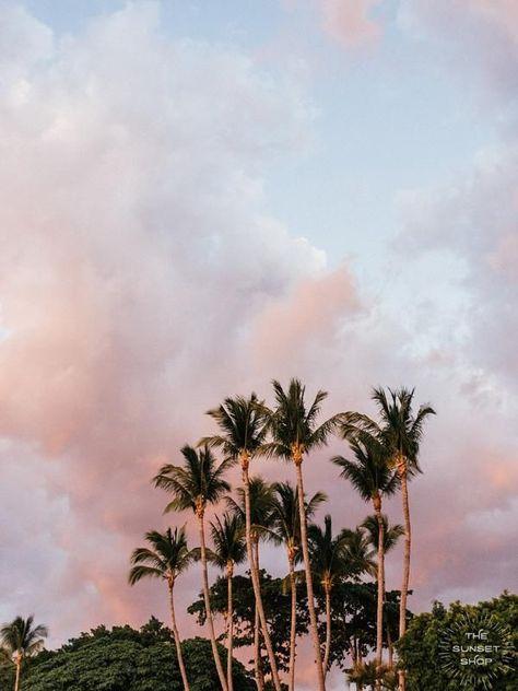 Cotton Candy Palms
