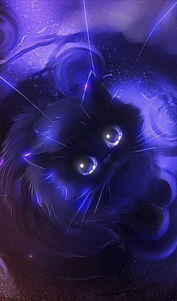 d1c4577ae0a11d3925899629b801c685-glitter-gif-cat-gif
