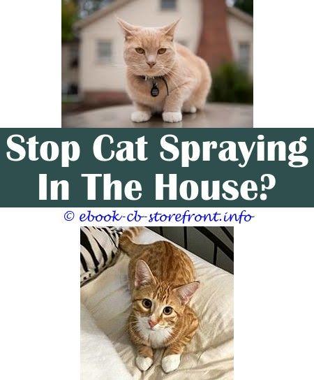 7345e40d1e6aafa0f6ec47e3dcbb1fe9 - How To Get Rid Of Cat Spray Smell Under House