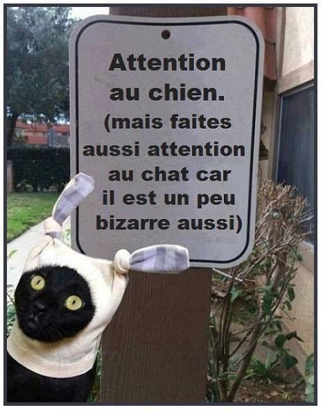 Il faut se méfier des chats :))