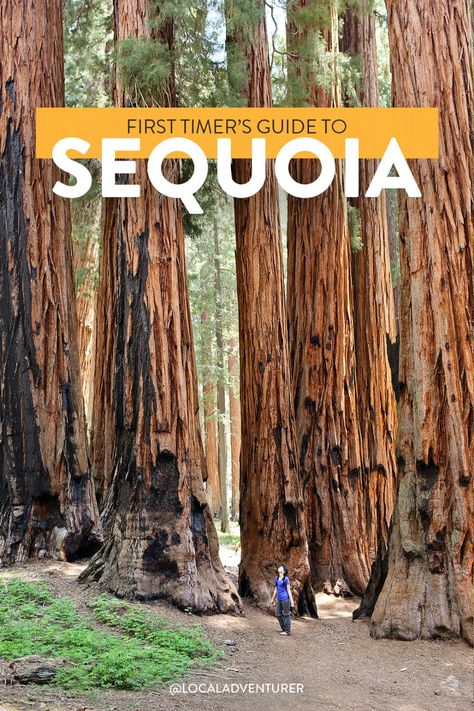 Check out our list of 15 Amazing Things to Do in Sequoia National Park and Kings Canyon National Park. They are home to the 3 largest trees in the world. Arcadia National Park, Yoho National Park, National Parks Map, Crater Lake National Park, Capitol Reef National Park, National Park Posters, Canyonlands National Park, Rainier National Park, California National Parks