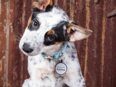Silidog The Silent Pet Tag With Images Pet Tags Dog Tags Pets