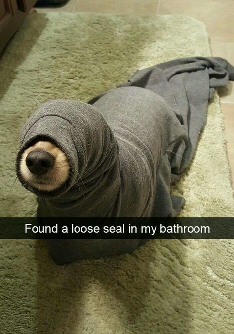 If you like funny dog memes, you've come to the right internet location. These are the 100 funniest dog memes of all time. Funny Animal Jokes, Funny Dog Memes, Cute Funny Animals, Funny Dogs, Pet Memes, Funny Puppies, Animal Humour, Hilarious Jokes, Cute Animal Humor