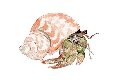 Hermit Crab 104 Print, Crab Watercolor, Crab Art, Beach House Decor, Crab Print, Ocean, Beach, Nautical, Wall Decor, Crab Wall Art