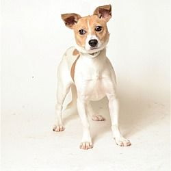 Columbus Ohio Terrier Unknown Type Small Meet Angelica A For Adoption Https Www Adoptapet Com Pet 22223689 Columbu Pets Kitten Adoption Shelter Dogs