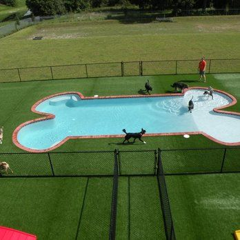13 Dog Swimming Pools Ideas Dog Pool Dog Daycare Dog Swimming Pools