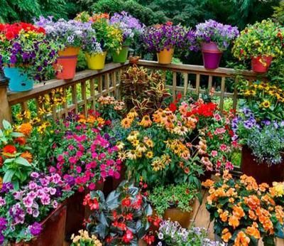Sol Plantas Vacaciones Tips Terraza Llena De Plantas Con Flores Terrazaplantas Container Gardening Flowers Garden Containers Container Flowers