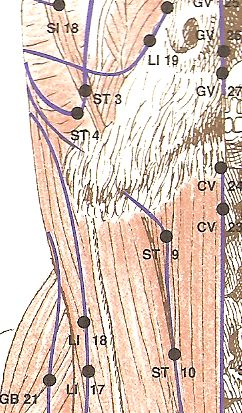 When The Points Shown Here In The Chart Are Stimulated Via Touch Or Pressure They Bring Harmony To The S Acupressure Points Animal Acupressure Dog Cat