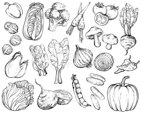 Collection Of Hand Drawn Vegetables Vector Illustration In Vintage In 2020 Vector Illustration Illustration How To Draw Hands