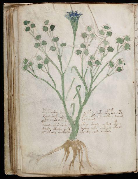 x x x ~ 'Beinecke Rare Book & Manuscript Library, Yale University   Voynich manuscript'