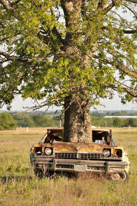 Tree Growing Out Of Abandoned Car 3 Free Stock Photo - Public Domain Pictures Abandoned Cars, Abandoned Buildings, Abandoned Places, Oklahoma, Landscape Photography, Nature Photography, Champs, Yellow Car, Unique Trees