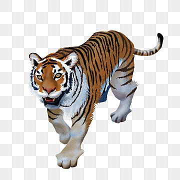 Animal Tiger King Of The Forest Tiger Clipart Animals Tiger Png Transparent Clipart Image And Psd File For Free Download In 2021 Animals Cat Vector Cartoon Elephant