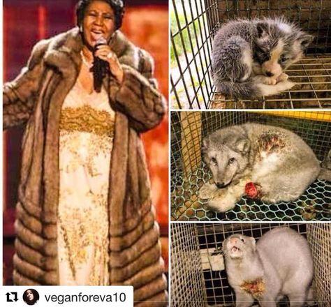 #plantbased #crueltyfree #animalliberation #vegan #veganlifestyle #veganlife #veganism #vegan #animalrights #vegetarian #govegan #veganfood #vegansofinstagram #vegansofig #veganism R.I.P