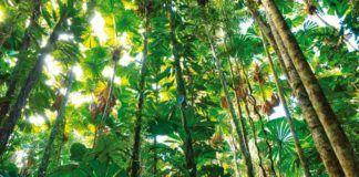 Sabana Tipos Clima Flora Fauna Y Características Ovacen Tipos De Bosques Biomas Plantas De La Selva