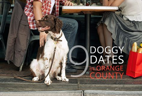 9 Best Doggy Dates Dog Friends Dogs Orange County
