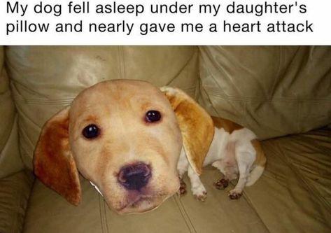 Cute Dog Face Pillow Creates Weird Optical Illusion Funny