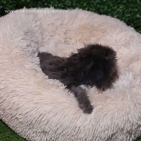 Pamper your pet with our super-soft pet bed.  Built with cushioned pillows and a circular shape, it allows your precious pet to burrow for a long night's sleep.   These ALL-NEW Fluffee Super Soft Plush Pet Beds are soft to the touch and allow for superior comfort.  A great gift for all dog and cat owners!
