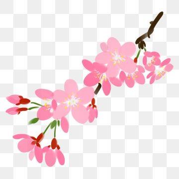 Branch Leaves Leaf Green Leaf Flower Cherry Blossom Illustration Season Pink Cherry Blossom Flower Clipart Cherry Blossoms Illustration Pink Flowers Background