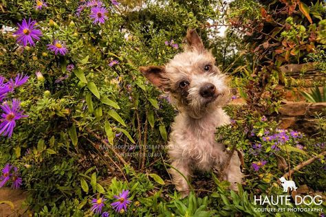 dogmomsofdallas Beautiful Bambi hears that...