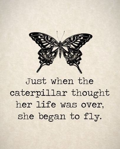 Butterfly Quotes With Images Butterfly Quotes Words Words Of Wisdom