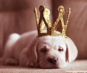 Whatsapp Dp Cute Pets Puppy Love Princess Puppies Sleeping Puppies