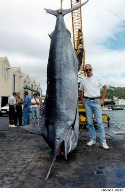 Amazing Catch Big Fish Caught By Fisherman Big Fish Catching Fish Monster Fishing