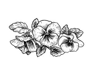 Hand drawn pansy flowers - Buy this stock vector and explore similar vectors at Adobe Stock