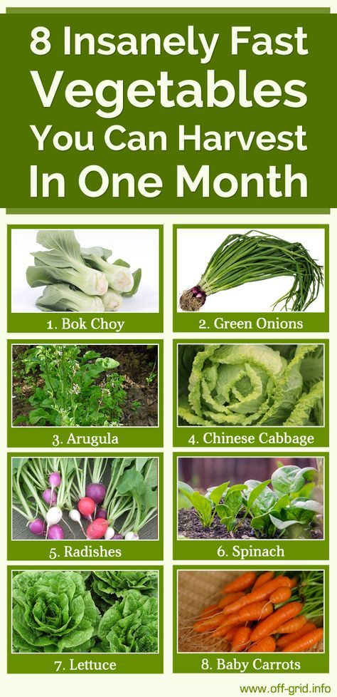 8 Insanely Fast Vegetables You Can Harvest In One Month Http