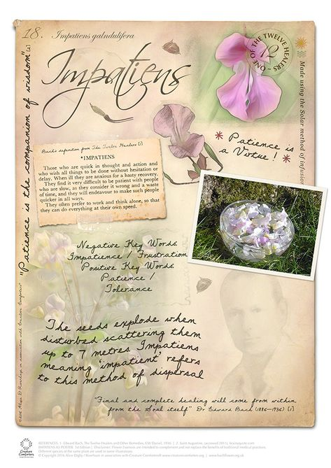 Image Result For Bach Flower Remedies Impatiens Healing
