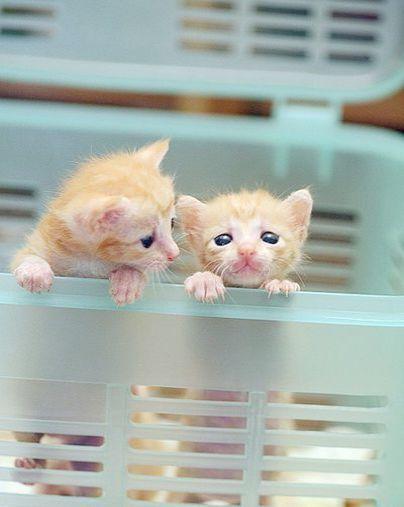 Kittens For Sale Oregon Craigslist
