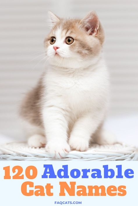Every cute cat needs a unique name, especially ones that