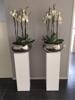 orchidee #teak #zuilen   For the Home   Pinterest   Orchid, Plants ...