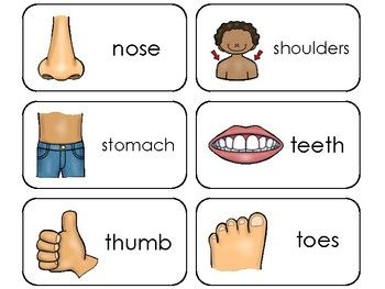 Body Parts Flash Card Set Educational Learning Picture /& Word Cards Bodyparts