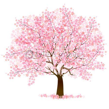 桜 花 背景の写真・イラスト素材 (xf3115152488) │ペイレスイメージズ