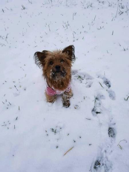 Hallo Ihr Lieben Tierfreunde Ich Muss Leider Meine Kleine Hundin Abgeben Ich Kann Leider Keine Suche Dri Beliebte Hunderassen Kleine Hunde Yorkshire Terrier