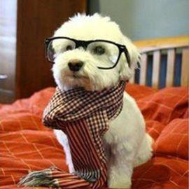 Pet Camera Customer Reviews The Petchatz System Petchatz Hipster Dog Cute Puppies Funny Dog Memes