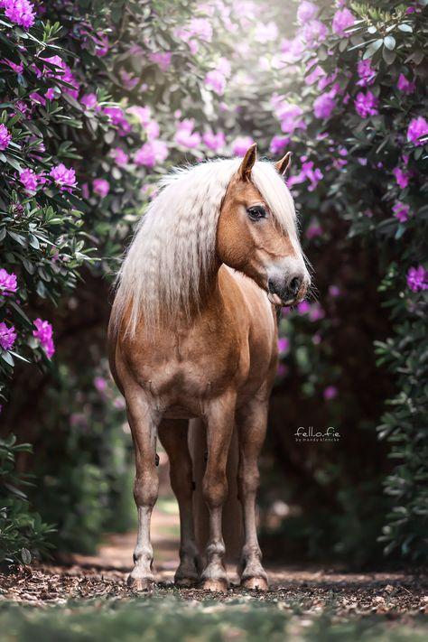 In dieser Location lässt sich jedes Pferd wunderbar in Scene setzen! Anfang Juni blüht der Rhododendron bei mir, also sei nächstes Jahr dabei!