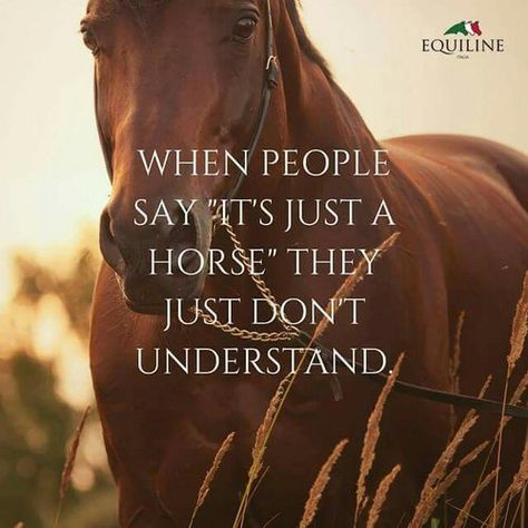 The most important role of equestrian clothing is for security Although horses can be trained they can be unforeseeable when provoked. Riders are susceptible while riding and handling horses, espec… Cute Horse Quotes, Inspirational Horse Quotes, Horse Riding Quotes, Cowboy Quotes, Cowgirl Quote, Animal Quotes, Horse Girl Quotes, Horse Sayings, Equine Quotes