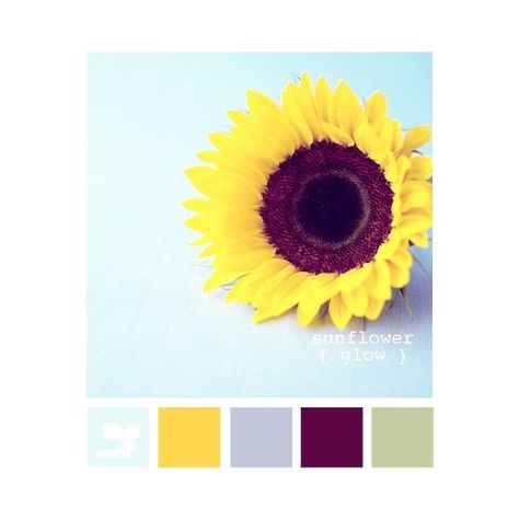 Design Seeds for all who color sunflower glow ❤ liked on Polyvore