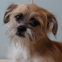 Adopt Mitzie On Terrier Dogs Dog Nose Border Terrier