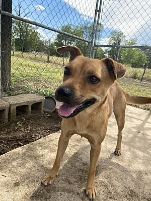 Denver Co Terrier Unknown Type Medium Meet Binky A Pet For Adoption In 2020 Pet Adoption Terrier Pets