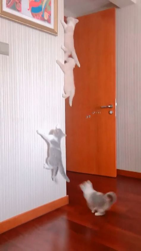 Several cats competed to climb high #cats #catlover #catlife #pet #love #cute #pets #ilovecat #catoftheday #catsagram #catlovers #animals #dog #dogs #pills