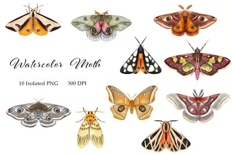 Watercolor Moth Clipart, Butterflies, Insects, Butterfly PNG (1345928) | Clipart | Design Bundles