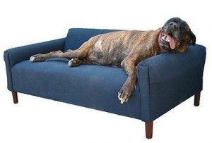 Cool Best Couch For Dog Owners Inspirational Best Couch For Dog